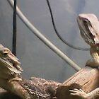 Iguana Friends by MINDSET