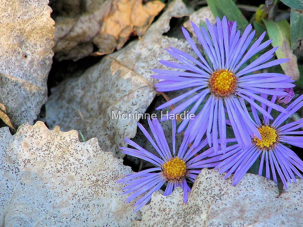 Purple Aster on Autum Leaves by Moninne Hardie