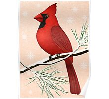 american red cardinal winter version :) Poster