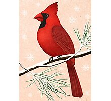 american red cardinal winter version :) Photographic Print