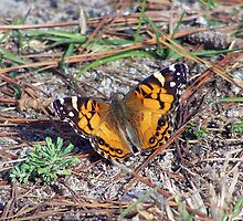 grounded butterfly by tomcat2170
