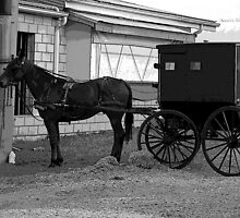 Amish Horse And Carriage by Kathleen Struckle