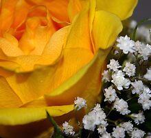 Friendship Rose by Amber Graham (grahamedia)