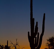 Sonoran Desert Sunrise by Bo Insogna
