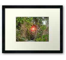 Sunset through the rainforest Framed Print