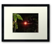 Sunset through the rainforest 2 Framed Print