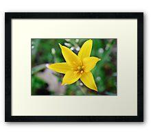 Wild yellow flower. Framed Print