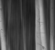 Autumn Aspen Trees Dreaming BW Sticker