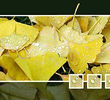 ginko in the rain by Alfred Koch