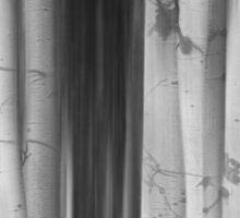 Aspen Tree Colonies Dreaming BW Sticker