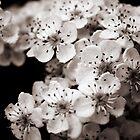 blossom by Lou McGill