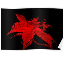 Red wine nature Poster