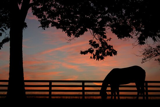 Kentucky Dawn by Scarlett