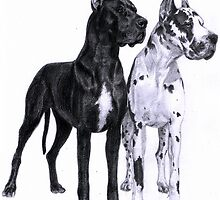 Great Danes by Danguole Serstinskaja