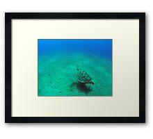 green sea turtle (Chelonia mydas)  Framed Print