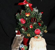 Skittles Decorating her Christmas Tree by AnnDixon