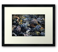 Dapple Framed Print