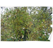 So many green leaves in December Poster