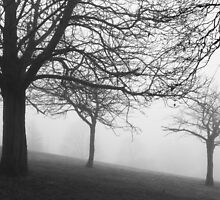 Trees in the fog by joelmeadows1