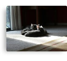 Kittens Sleeping Canvas Print
