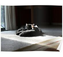 Kittens Sleeping Poster