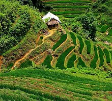 A House in the Rice Fields - Sa Pa, Vietnam. by Tiffany Lenoir