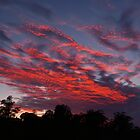 Fiery Sky by Suzy  Baines