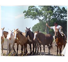 Argentina....Gaucho with his horses Poster