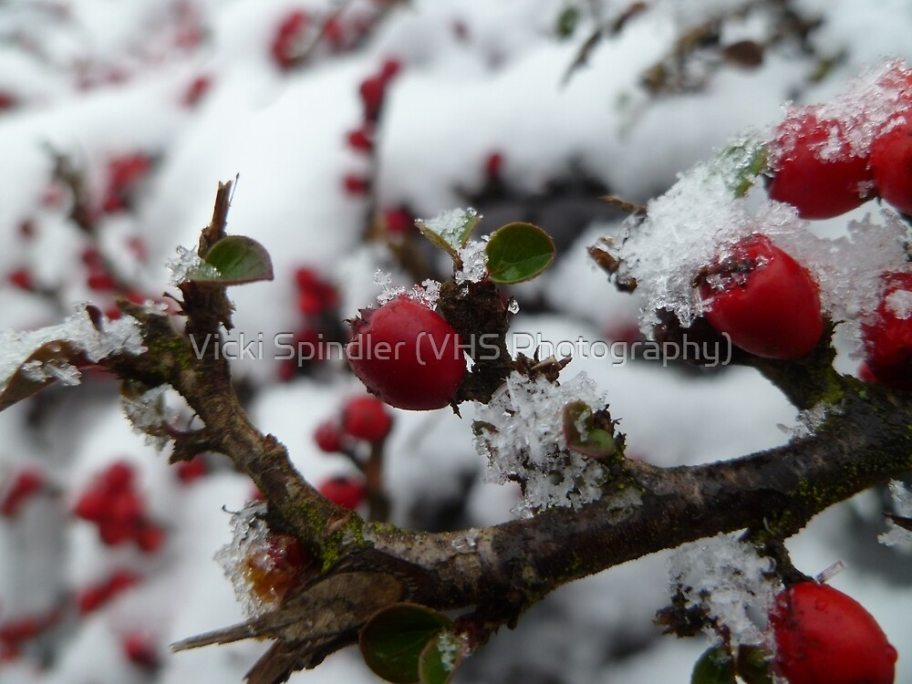 Red Berries by Vicki Spindler (VHS Photography)