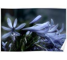 Moonlit Lavender Petals Poster