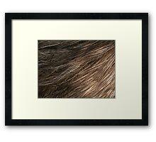 Emu Plumage Framed Print
