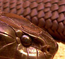 Snake by margotk