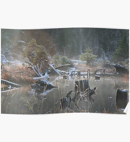 Enchanted Forests Poster