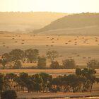 Summer in the Wheatbelt by Caroline Scott