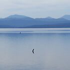 Macquarie Harbour by Hannah Nicholas