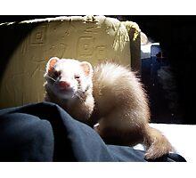 Ferret Girl Photographic Print
