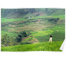The Child in the Fields - Sa Pa, Vietnam. Poster