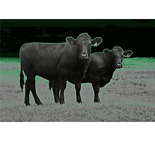 Cley Cows C Photographic Print
