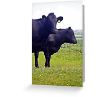 Cley Cows Too A Greeting Card