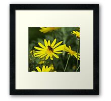 Collections Agent Framed Print