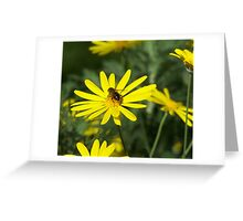 Collections Agent Greeting Card