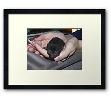 Life In The Palm Of Your Hands. Framed Print