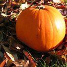 Pumpkin by Luci Mahon