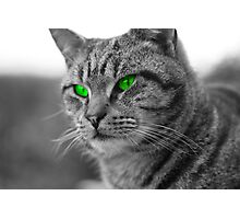 Enviromental Cat Photographic Print
