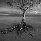 lone tree - Cape York. by Tony Middleton