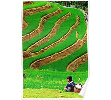 The Woman in the Terrace Field - Sa Pa, Vietnam. Poster