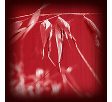 Grass Red Photographic Print