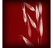 Grass Red 3 Photographic Print