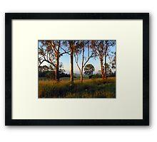 Dawn in the bush Framed Print
