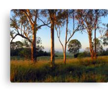 Dawn in the bush Canvas Print